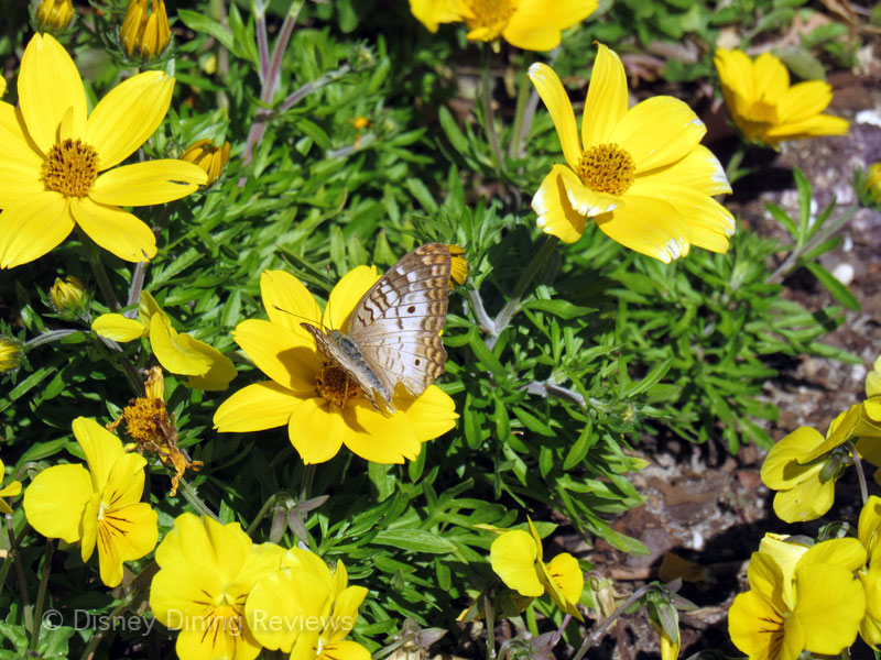 fgf17-butterfly-yellow-flowers